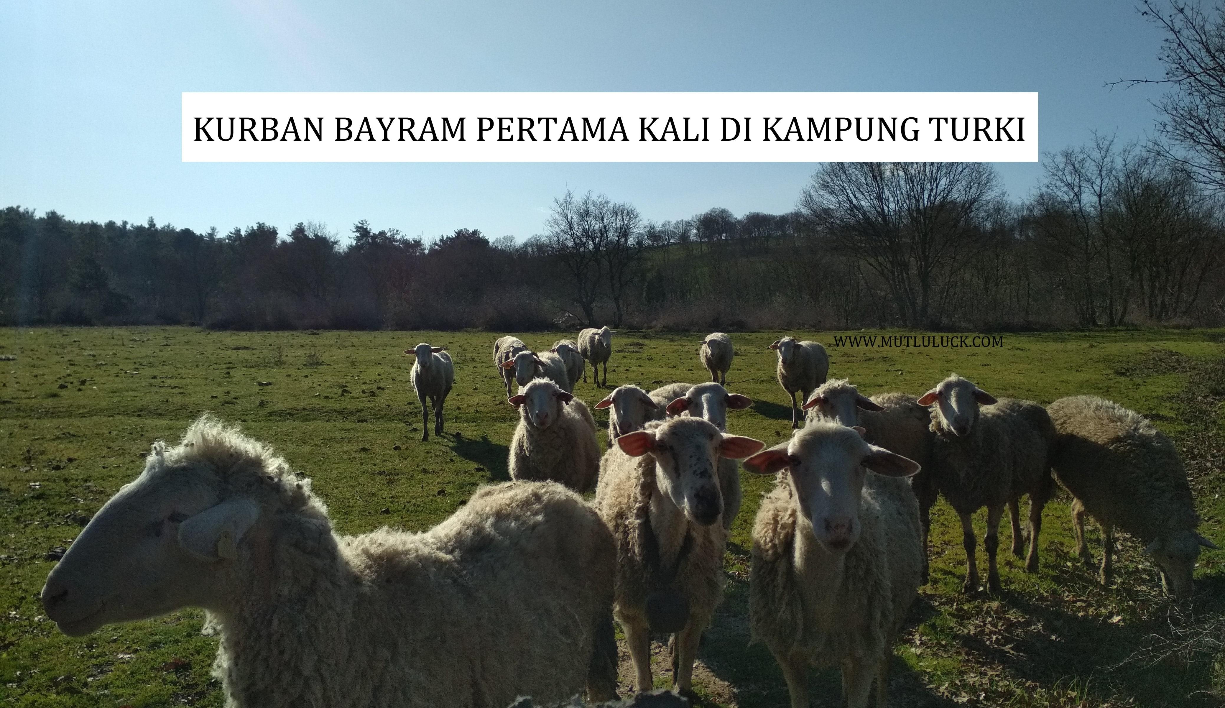 KURBAN BAYRAM PERTAMA DI TURKI